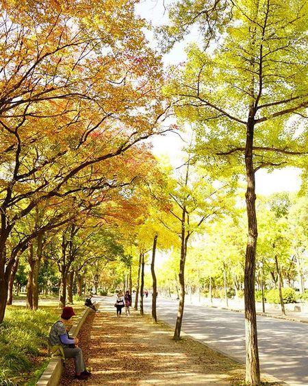 great just walkin through . Autumnlove Autumn Fall Fallingleaves Osakawalk OSAKA Red Yellow 紅葉 😚 Nofilter 大阪城公園 Travelgram