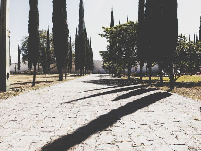Cementery Jalisco Guadalajara Shadow Tree Sunlight Nature Plant Day Architecture No People Outdoors Park Growth