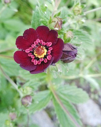 What I Value Valley Of Flowers God Of Small Things Edge Of The World Uttarakhand Flowers Eyem Gallery Eyem Nature Lovers  Tadaa Community Nature