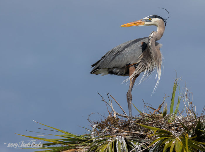 Low angle view of gray heron perching on plant against sky