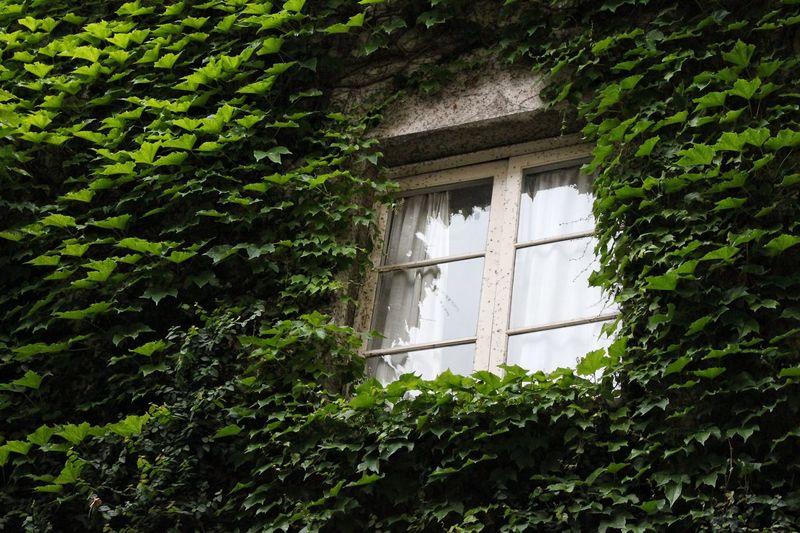 Magic window Green Color Plant Architecture Outdoors Nature Built Structure Building Exterior Window Greenisgood GreenIsLife Fairytale  Façade Growth Tempsdeflors Girona