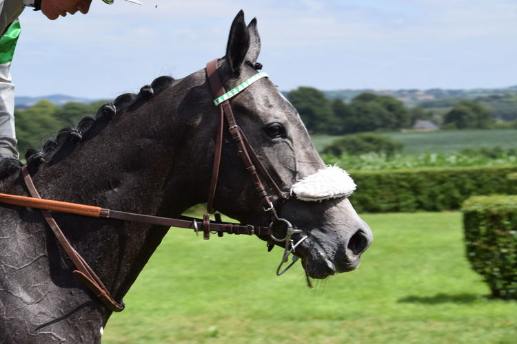 Day At The Races Horse Horse Head Horse Photography  Horse Racing Jockey Race Day Sport