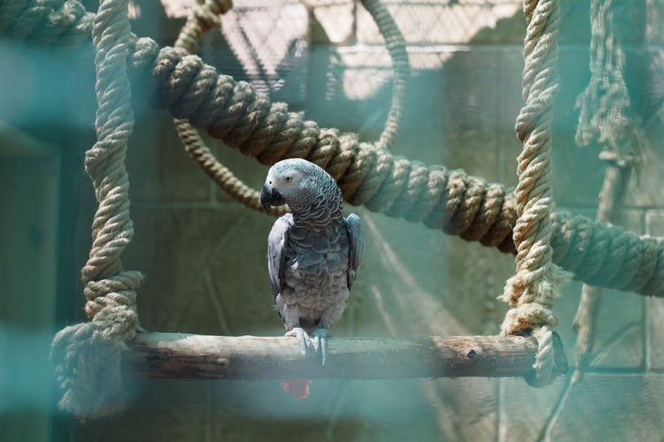 just parr ot Parrot Bird Water Cage Trapped Close-up