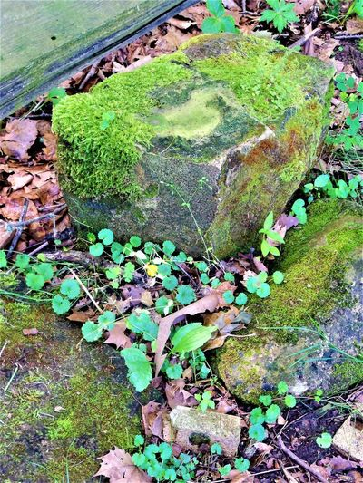 Sandstone Indiana Nature Beauty In Nature Close-up Day Field Grass Green Color Growth High Angle View Land Leaf Messy Moss Nature No People Outdoors Plant Plant Part Rock Sandstone Sandstone Rocks Solid Stone Tranquility