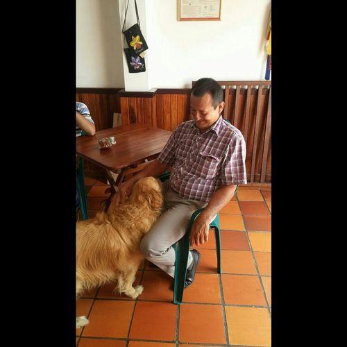 Dad♥ Amor Eterno.♡ Vida Happy Padre E Hija Amoreterno Golden Dog❤