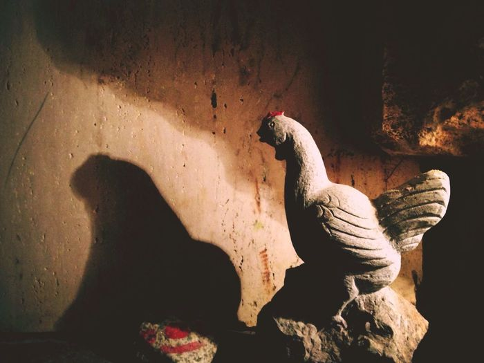 Why Chicken is being in a Maze …? Light And Shadow