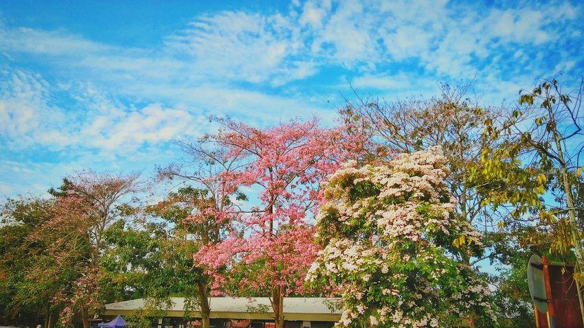 Flowers Cityscape At Alor Setar Malaysia EyeEm Selects