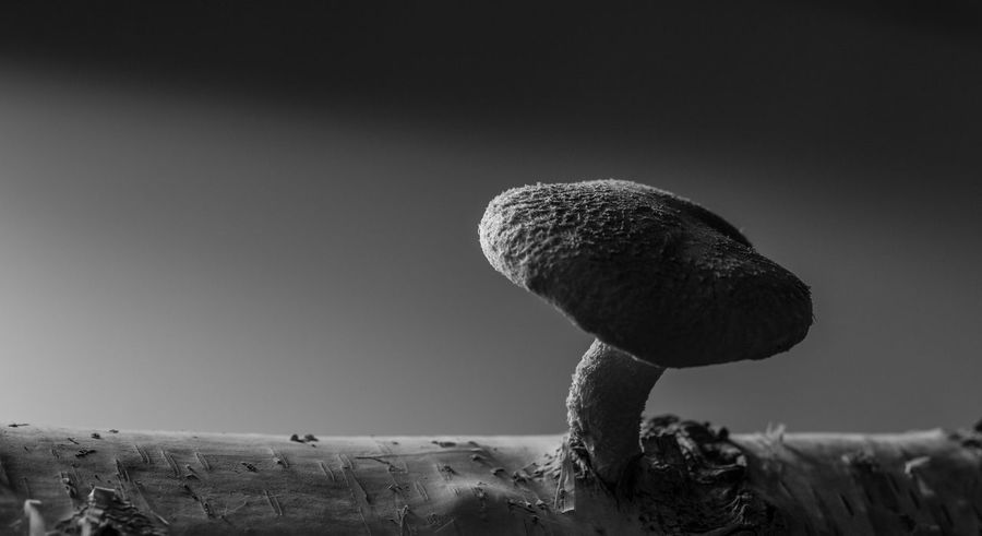 Shadow And Light Beauty In Nature Black And White Close-up Closeup Food Healty Medical Mushroom Nature No People Outdoors Shiitake