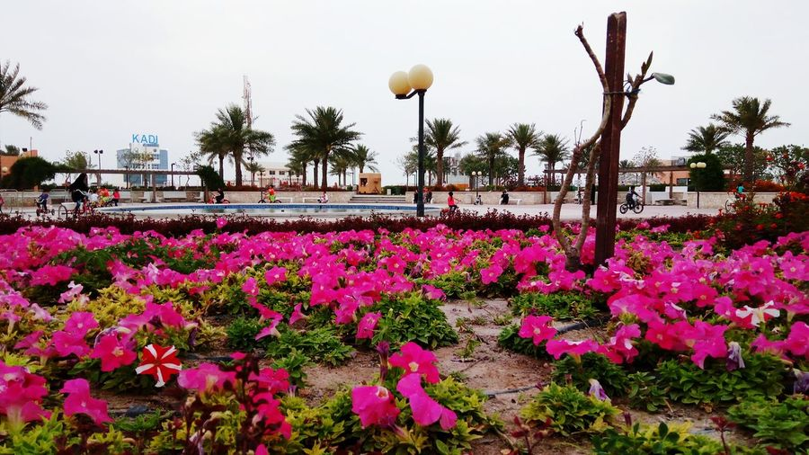 Flower No People Outdoors Sky Day Photography Bahrain Manama Bahrain Tourism Nature Beauty In Nature