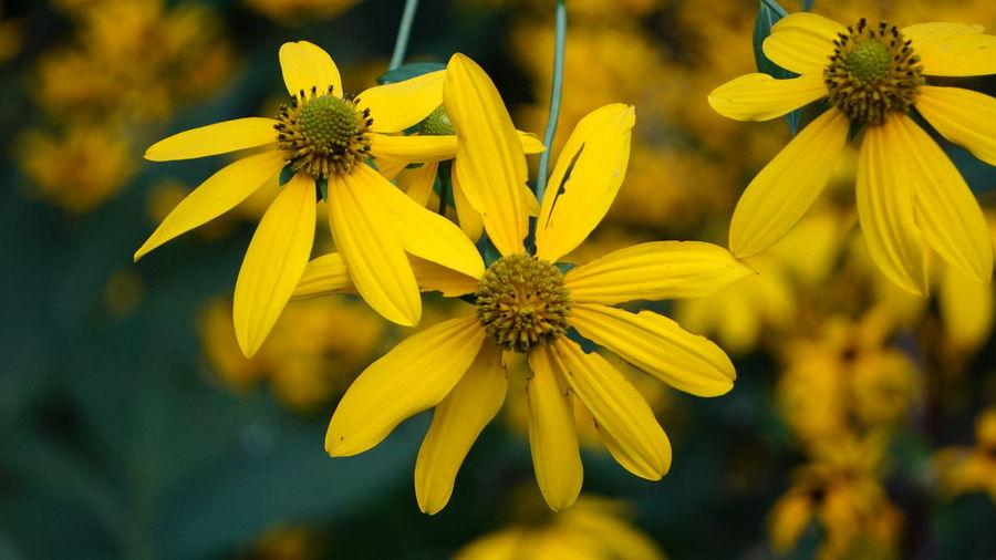 3 Yellow Flower