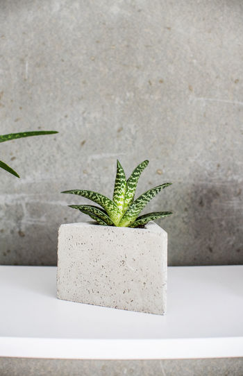 Close-up of potted plant on concrete wall