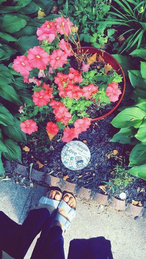TakeoverContrast New Jersey RIDGEFIELD Floewers Pink