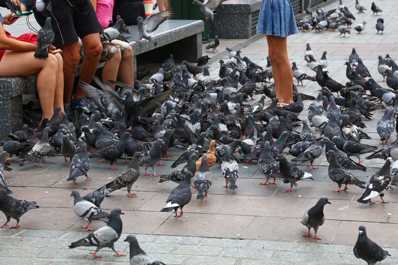 Midsection Of People With Pigeons In City