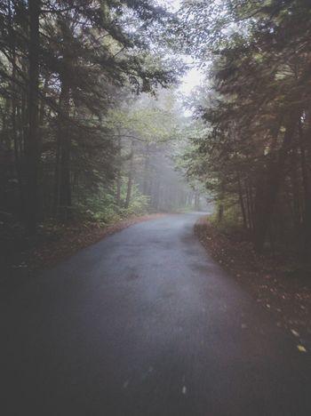 Foggy bike ride
