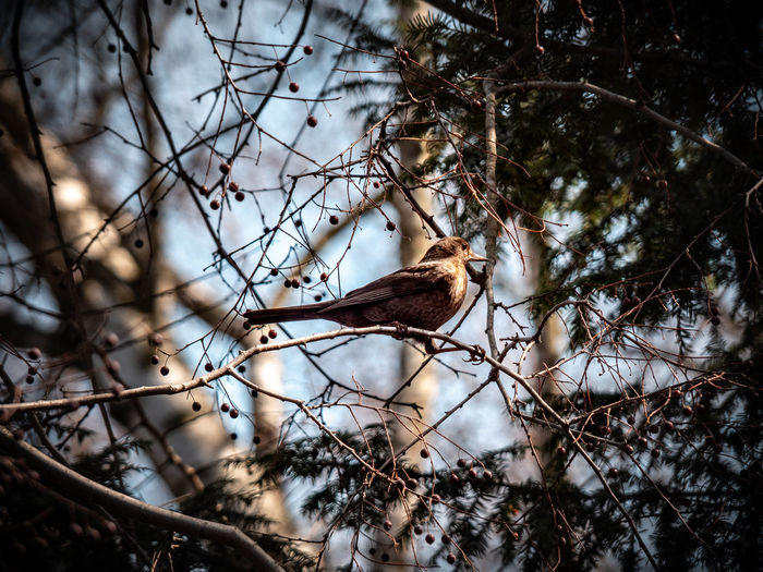 Tree Vertebrate Branch Animal Wildlife One Animal Animal Animal Themes Animals In The Wild Plant Bird Perching Nature Day No People Selective Focus Low Angle View Focus On Foreground Outdoors Bare Tree Beauty In Nature