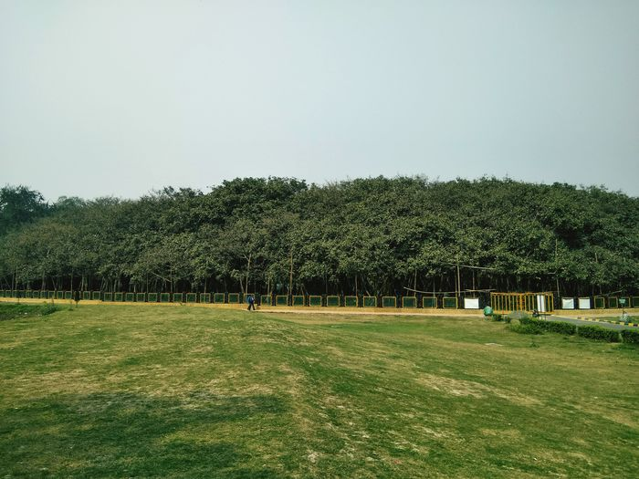 Great Banyan Tree Grass Tree Green Color Outdoors No People Nature Sky