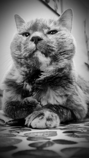 Mae-mae 15 years old <3 One Animal Animal Themes Pets Domestic Animals Close-up Focus On Foreground Domestic Cat Feline No People Cat Cats Of EyeEm Six-toe Sweetie Newspaper Cat Trying New Angles B&w