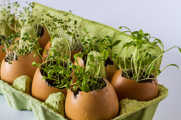 Close-Up Of Plants In Broken Eggs On White Background