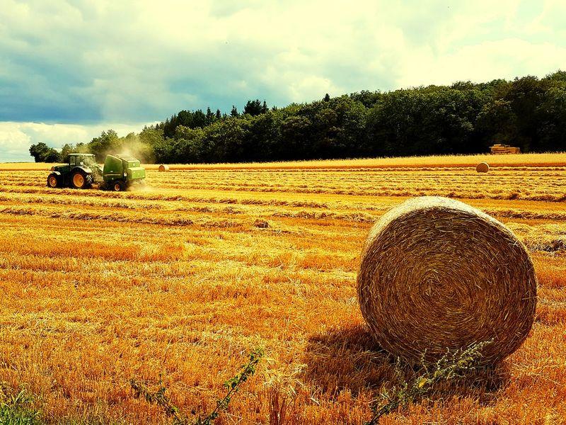 Agriculture Rural Scene Agriculture Landscape Fild Champs De Blé Moisson Bourgogne Bourgogne-Franche-Comte France EyeEmNewHere