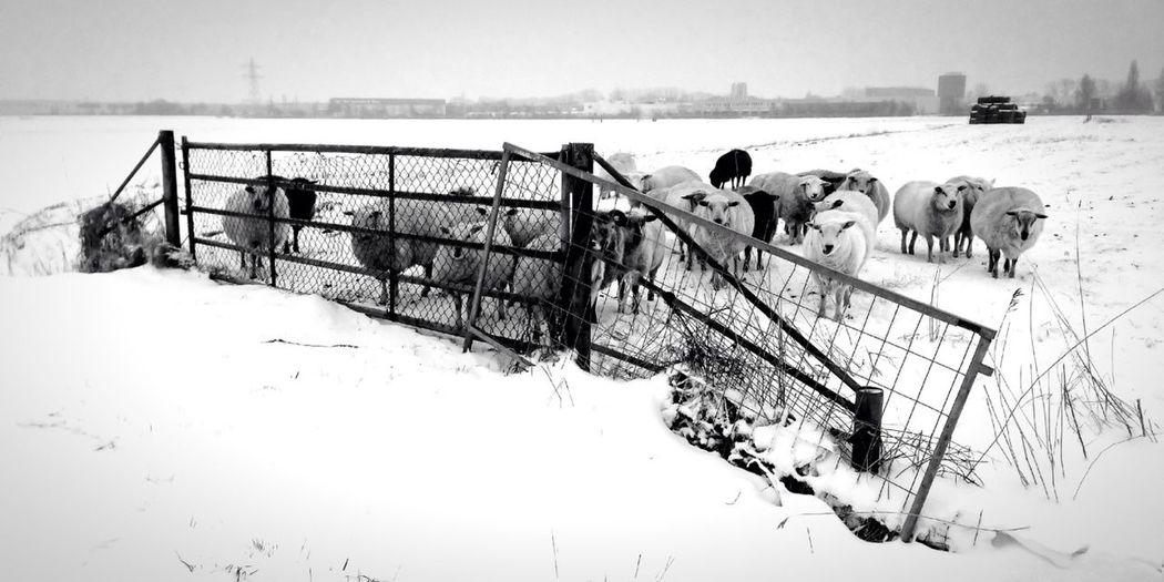 Waiting for spring ..... Snow Shootermag AMPt_community NEM Black&white