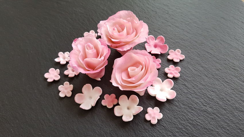 Pink Color Flower No People Table Close-up Indoors  Black Background Fragility Freshness Day sugar roses