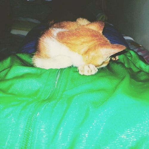 so I think I am not really the only one feeling cold this bad weather. Pet Feline Cats Meowstagram