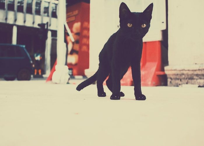 Kitty cat in the streets Domestic Cat Pets Street Outdoors Feline City Adult Domestic Animals Cold Temperature Day People Animals Petstagram Cat Winter Collar Mammal Adults Only First Eyeem Photo Urbanphotography EyeEmNewHere