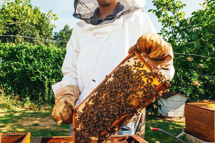 Midsection of man holding beehive
