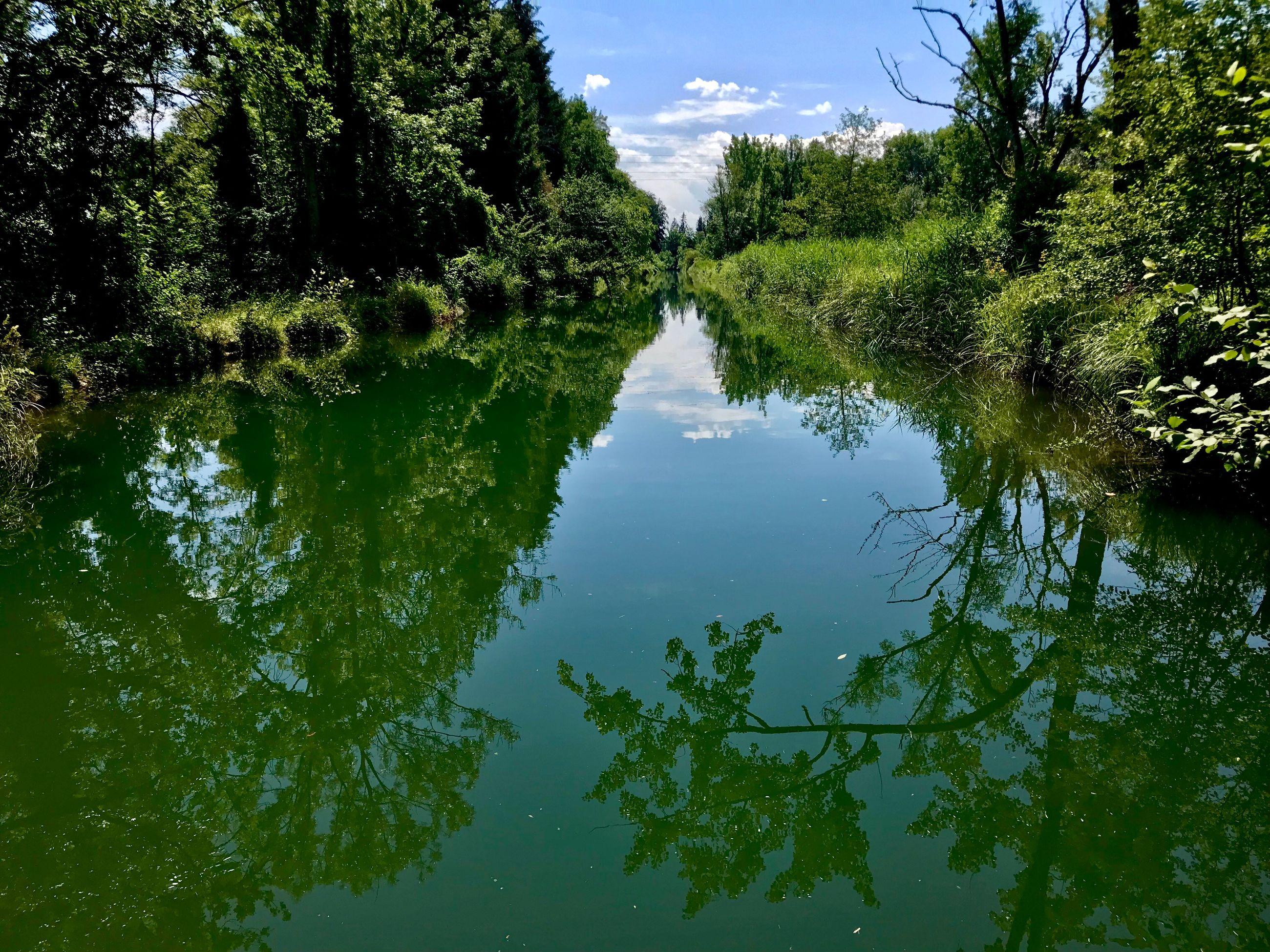 water, plant, reflection, tree, lake, tranquility, nature, tranquil scene, sky, growth, day, green color, no people, scenics - nature, non-urban scene, beauty in nature, waterfront, outdoors, forest