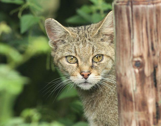 Wildcat One