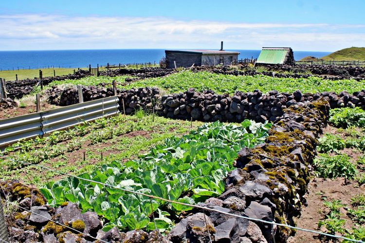Nature Agriculture Landscape Land No People Solid Environment Potatoe Fileds Rock Outdoors Stone Wall Plantation Sea Water Day Sky Tristan Da Cunha Tristan Da Cunha Island Most Remote Island In The World