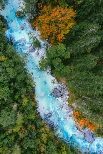 Aerial image of beautiful soca river surrounded by colorful fall foliage, slovenia