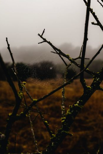 Between Branches Fog Drop Water Nature No People Plant Wet Sky Close-up Tree Focus On Foreground Outdoors Rain RainDrop Day
