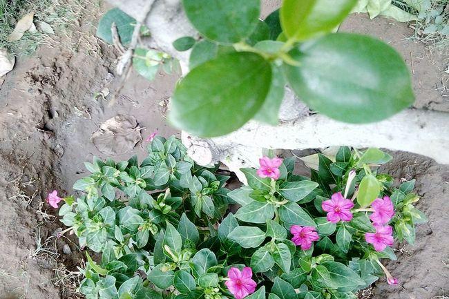 Bloom Ground Brown SSClickPics SSClickpix SSClicks Ssclix High Angle View Close-up Plant Green Color