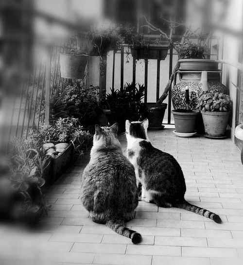 #cats Pets Love Home Summertime Cats