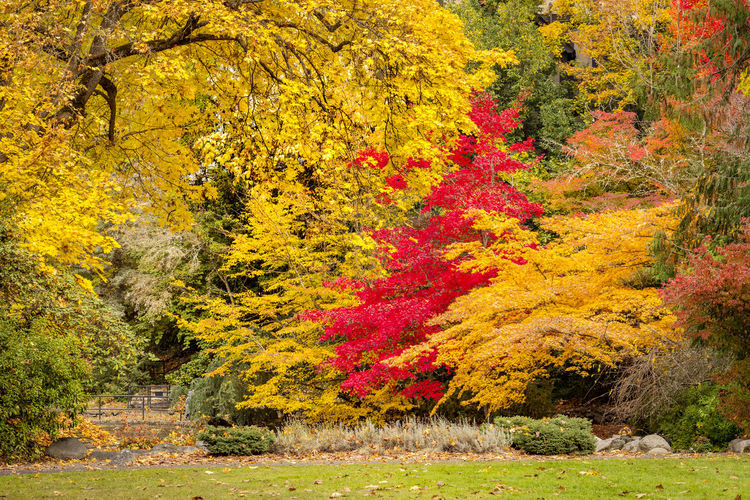 Autumn Park landscape Autumn Plant Tree Yellow Beauty In Nature Nature Multi Colored Land No People Tranquility Scenics - Nature Red Tranquil Scene Ornamental Garden Outdoors Autumn colors Japanese Maple Tree Red Yellow Color Horizontal Composition Grass Landscape