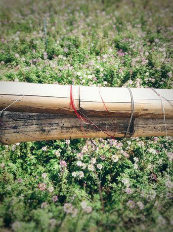 No People Captured Moment Bamboo Bridge Memories ❤ Lonelyday