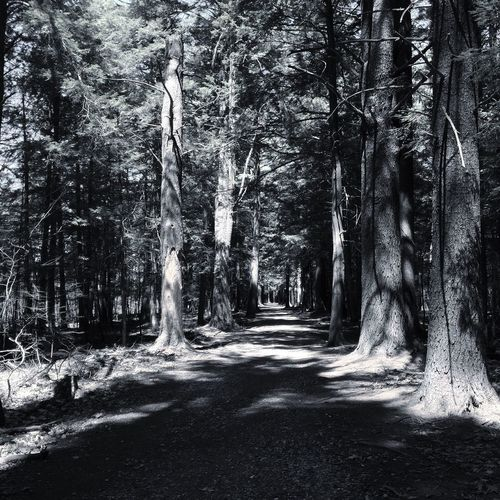 The Great Outdoors - 2016 EyeEm Awards Nature Photography Nature Trees Blackandwhite Hiking Litchfield Connecticut