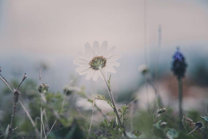 Bright & Freshness Nature - White Daisy . White Flower Wild Flowers EyeEm Nature Lover EyeEm Best Shots - Nature Showcase April Beauty In Nature Backlight Enjoy Nature Nature's Diversities