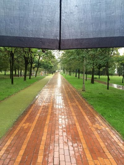 Park - Man Made Space Walkway Tree Trunk Growth Day Outdoors Footpath Majestic Green Color Take A Walk Rainy Day Rain Park Nature Walk City Park Daytime Under Umbrella Umbrella My Way Way To Home