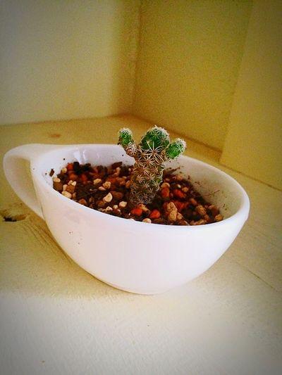 Relaxing Cactus Cute さぼすけ Love
