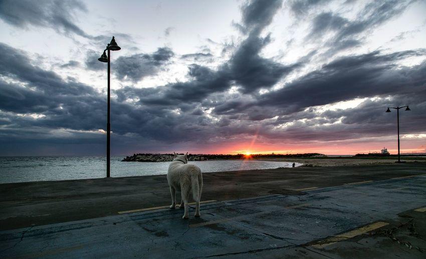 Dog Siberian Husky Horizon Pet Animal White Horizon Sunset Sunset #sun #clouds #skylovers #sky #nature #beautifulinnature #naturalbeauty #photography #landscape Dark