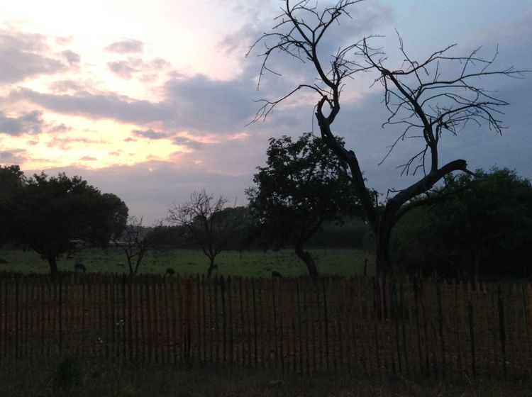 Beauty In Nature Farm Fence Field Landscape Nature Sky Tranquil Scene Tranquility Tree