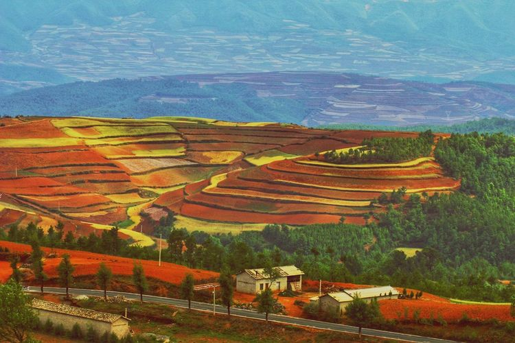 China Photos Landscape_photography Landscape_Collection Patchwork Landscape China Terraced Field Multi Colored Rural Scene Beauty Tree Agriculture Mountain Field Pattern Landscape Rice Paddy Rice - Cereal Plant Cultivated Land Plantation Farm Canyon Agricultural Field Cereal Plant