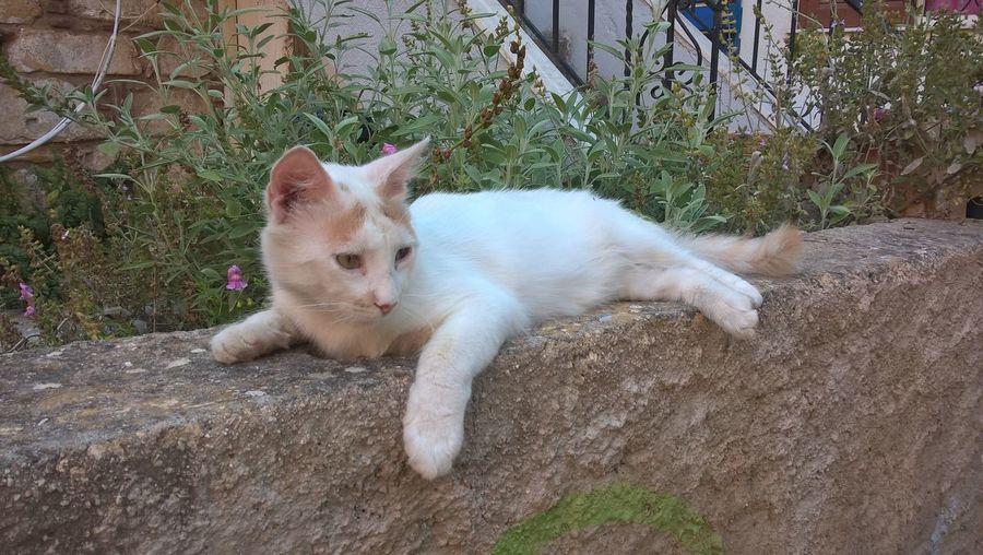 Portrait of cat relaxing by plants