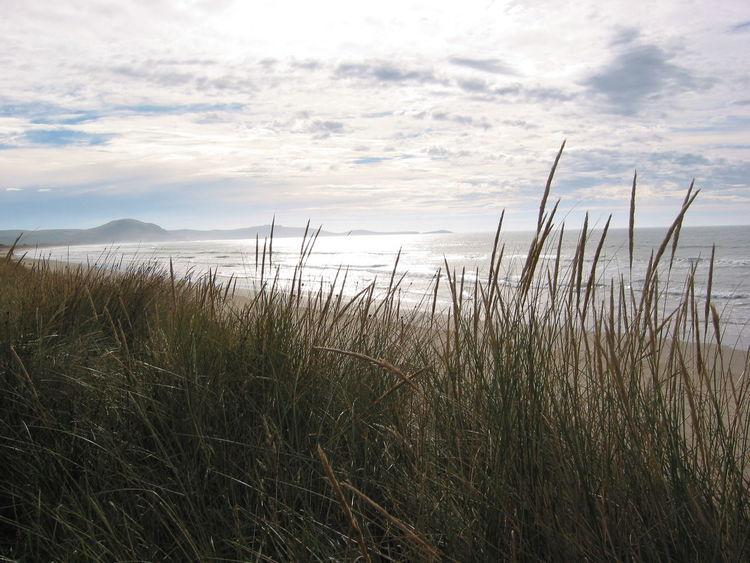 Beach Coast Dunes Evening Grass Landscape Nature New Zealand Ocean Outdoors Reed Sea Tranquil Scene Tranquility