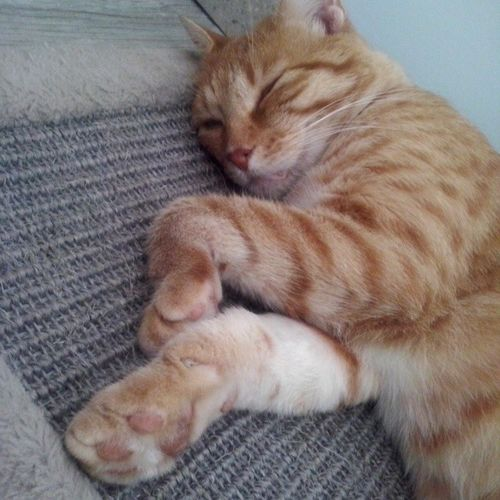 Romeo is Sleeping