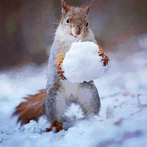 Who said squirels doesn't play??? Snow Fun Snowballfight Squirelfun Squirelgamecrazy