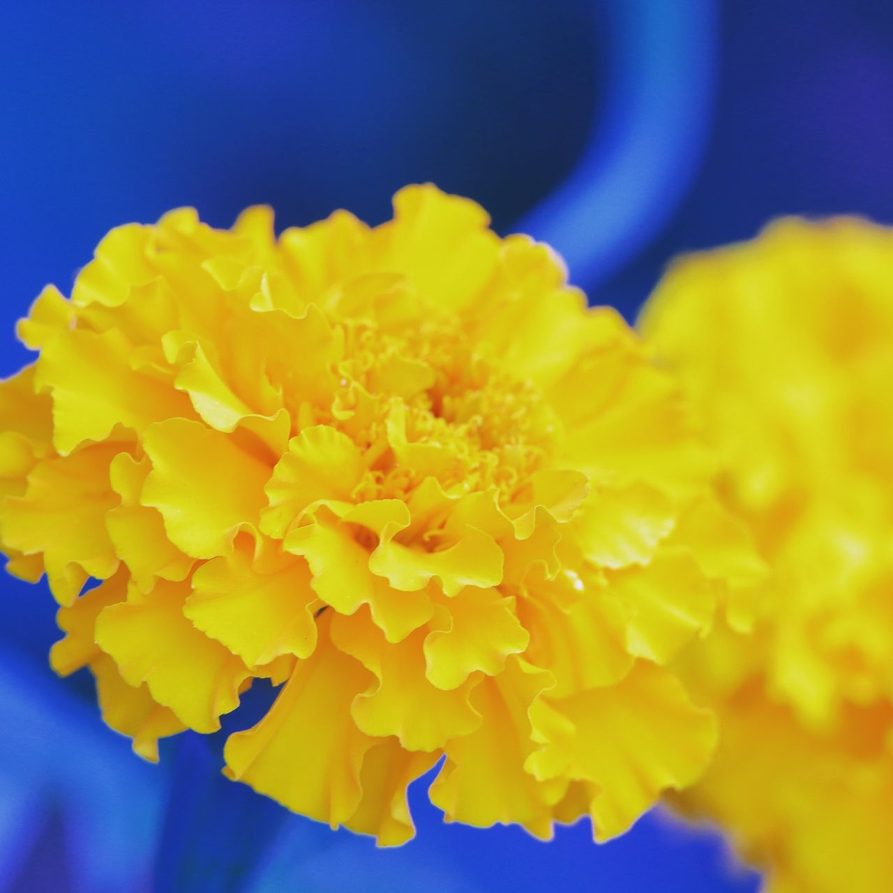 flower, yellow, fragility, beauty in nature, petal, nature, freshness, close-up, flower head, no people, vibrant color, outdoors, growth, blue, plant, day, blooming