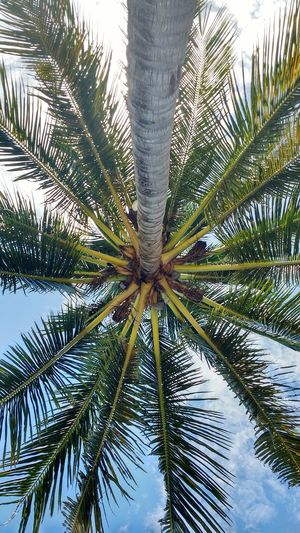 Palm Tree Tree Nature Beauty In Nature Trunk Green Tropical Upside Down Underside View Cover Natural Umbrella Perspectives On Nature Texture From The Ground Up Beach Perspective